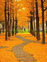 黄叶在秋风中飘落